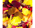 Ultimate case 224 cups Freeze Dried Rose Petals Fall Mix