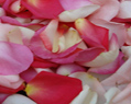 Pink Blend Fresh Rose Petals Wedding 250