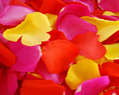 Yellow Hot Red Pink Fresh Rose Petals Wedding 250