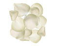 White Fresh Rose Petals Wedding 3000